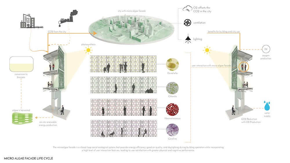 0_Life Cycles Microalgae